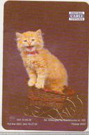 Romania Small Calendar - 1999 - Cat - Control Cable Venture Ploiesti - Calendriers