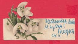 237944 / Flowers Fleurs Blumen Snowdrop Plants - Flowers