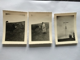 18ZB - Vache Et Calvaire Semnoz - Places