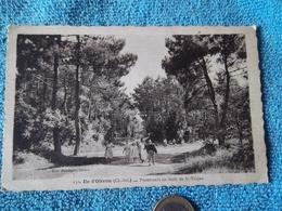 Ile D'Oléron-pronenade En Forêt De Saint Trojan - Ile D'Oléron