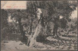Studio Di Olivi, Tivoli, Lazio, C.1905-10 - Cartolina - Tivoli