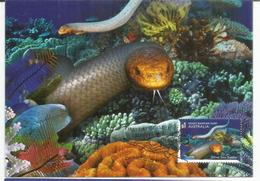 Serpent Très Venimeux,olive Sea Snake Des Coraux, Belle Carte-maximun D'Australie - Snakes