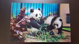 Old NORTH KOREA  Postcard -  Panda  - STEREO 3D PC - - Rare!!! - Corée Du Nord