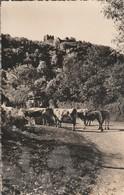 Ain : THOL : Les Environs De Neuville-sur-ain : Le Chateau Féodal Et Ses Vaches ( Cpsm Photo Vérit. ) - France