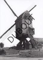 Zittaart Molen/Moulin Originele Foto Jaren '70  B19 - Meerhout