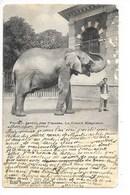 PARIS  (cpa 75)  Jardin Des Plantes - Le Grand Eléphant    - L 1 - Parcs, Jardins