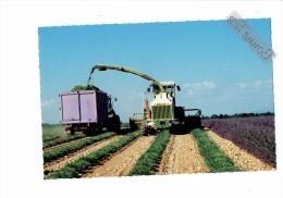 Cpm - 04 - VALENSOLE - Récolte De Lavande - Faucheuse Matériel Agricole REMORQUE TRACTEUR  - 2009 - Tracteurs