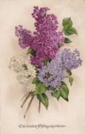 AL86 Greetings - Pfingstgrusse, Flowers - Pentecost