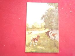 ENTRE 1907 ET 1910 PATURAGE BOVINS HP ED ? NON CIRCULÉE DOS DIVISE  ETAT BON - Postcards