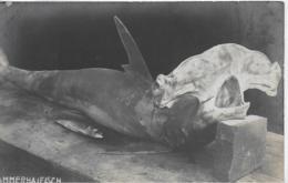 AK 0061  Hammerhaifisch - Stimmungsbild Von Der Adria ( Im Besitz Sr. Majestät Kaiser & König Karl ) Um 1917 - Fische Und Schaltiere