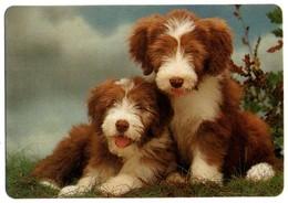 ANTIGUO CALENDARIO OLD CALENDAR DE BOLSILLO MANO 1996 PERROS DOGS PERRO DOG CAN HUND CHIEN SIN PUBLICIDAD VER FOTO/S - Calendarios