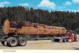 CAMION POIDS LOURD ( USA CALIFORNIA CA ) Tons Of Toothpicks - Redwood Highway - CPSM GF Lorry Truck Lkw Caminhão Lastbil - Camion, Tir