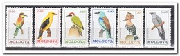 Moldavië 1992, Postfris MNH, Birds - Moldavië
