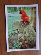 Honduras / Copan, Maya Ruinen (papegaai, Ara) --> Info On The Back - Honduras