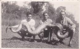 BRAZIL, AMAZONAS. HOMBRES HOMMES & BOA CONSTRICTOR. CIRCA 1950s NON CIRCULEE- BLEUP - Brazilië