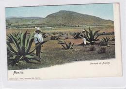 HACIENDA DE MAGUEY, MEXICO. LATAPI Y VERT. CIRCA 1940s NON CIRCULEE - BLEUP - Mexico