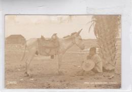UN DESCANSO. MEXICO. DESENTIS JR. BURRO Y HOMBRE DESCANZANDO. CIRCA 1930s. NON CIRCULEE - BLEUP - Mexico