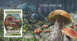 Mozambique 2018   Mushrooms S201809 - Mozambique