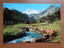 Suisse / Koe, Cow, Vache / Alpaufzug Bei Adelboden --> Written 1989 - BE Berne