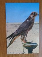 Bahrein / Trained Falcon --> Written (bit Damaged) - Bahrain