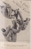 Paris Museum D'Histoire Naturelle Peresseux  1927 - Museums