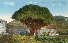 ESPAGNE(TENERIFE) ARBRE - Arbres