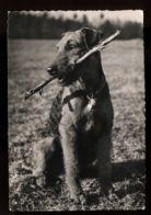 B7574 CANE / DOG / CHIEN / PERRO - Dogs