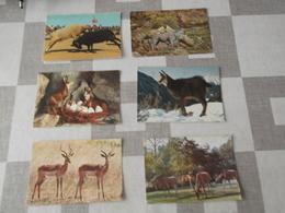 LOT Van 600 Postkaarten DIEREN  - ALGEMEEN - Postcards