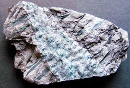 Fossiles Plante Du Carbonifère Carboniferous Plant Stigmaria Ficoïdes Départ 1 €  !!!!! - Fossiles