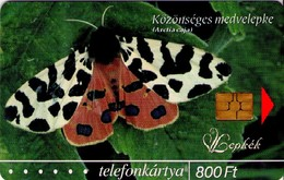 TARJETA TELEFONICA DE HUNGRIA (FAUNA), Közönséges Medvelepke (Arctia Caja),MARIPOSAS - BUTTERFLIES, HU-P-2004-30. (058) - Vlinders