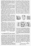 LE PERCEMENT DES BOIS FOSSILES  1878 - Other