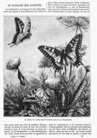 LE PAPILLON Des CAROTTES  1878 - Animaux