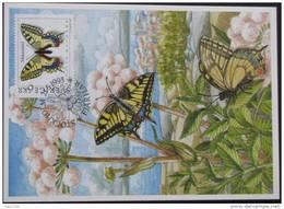 Maximumkaart Vlinders Butterfly Schmetterlinge Papillons - Maximumkarten (MC)