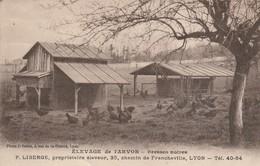 Agriculture : élevage De L'arvor ( Bresses Noires - Poulets ) - Elevage