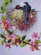 Cpa Oiseaux HIRONDELLES  NID , CHEVREFEUILLE En FLEURS  Fond Argenté  1906 FLOWERS HONEYSUCKLE , BIRDS SWALLOW NEST - Oiseaux