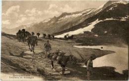 Schweizer Militär - Gebirgsartillerie - Non Classés