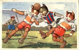 Katzen  - Football - Gatti
