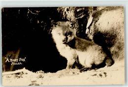 52695799 - Baby Fuchs - Animaux & Faune