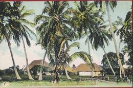 Cuba Isla De Pinos Coco Cocoa Nut Palms Native Homes Caserio Colonial Period Rare Old Postcard Tarjeta Postal - Cuba