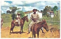 Cpsm Brésil - ... Le Cheval Et Le Mulet Sont Encore Les Moyens De Transport ... - Brésil
