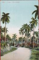 Cuba Una Carretera A Road Oldtimer Car Voiture Palm Trees Colonial Period Rare Old Postcard Tarjeta Postal - Cuba