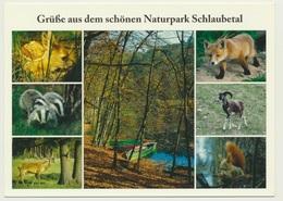 AK   Naturpark Wildpark Schlaubetal - Animaux & Faune