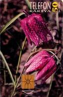 TARJETA TELEFONICA DE HUNGRIA. PROTECTED FLOWERS.  Kockás Liliom (Fritillaria Meleagris). HU-P-1995-24Aa. (187) - Flores