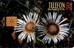 TARJETA TELEFONICA DE HUNGRIA. PROTECTED FLOWERS.  Szártalan Bábakalács (Carlina Acaulis). HU-P-1995-28A. (185) - Flores