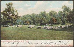 Elizabeth Park, Hartford, Connecticut, 1906 - Souvenir Post Card Co Postcard - Hartford