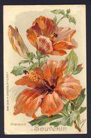 HIBISCUS. Souvenir / Hibiscus Memory ~ Orange Colored Flower ~ Eudes A/s - Publicité