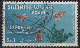 SOMALIA - 1955 - Yvert Espresso 12, Usato. - Somalia (AFIS)