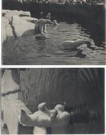 CPSM - PARC ZOOLOGIQUE BOIS De VINCENNES - OURS BLANC - Edition Draeger - Animales