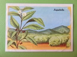 """Image Chocolaterie D'Aiguebelle - N° 278 - Arbre à Thé - Collection """"La Promenade Enchantée"""" - Album N° 2 - Aiguebelle"""