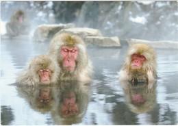 D373 SINGES DES NEIGES DANS L'EAU - SNOW MONKEY, JIGOKUDANI ONSEN - FUKUDA YUKIHIRO - Apen